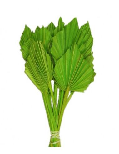 Frunze de Palmier Mini Verde Deschis