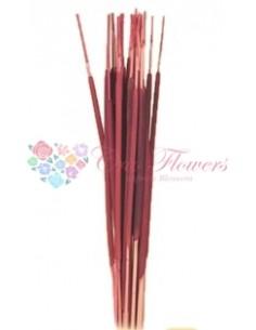 Amaranthus burgundy