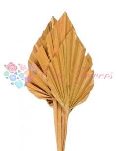 Frunze Palmier Mediu Portocaliu Ceruit