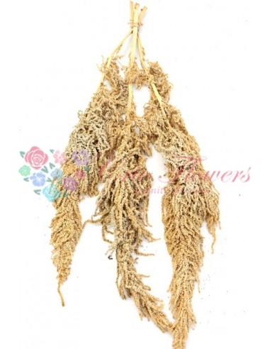 Amaranthus Criogenat Crem