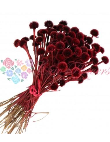 Flori Musetel Uscate Rosu
