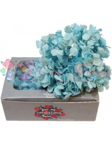 Hydrangea Blu03(Hortensie)