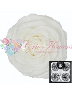 Trandafiri Criogenati AlbPur BellaWhi01