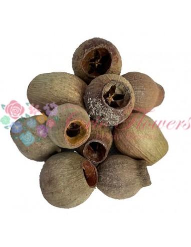 Fructe Eucalipt Clopot Natur