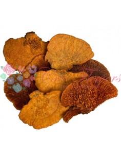 Ciuperci Decorative Portocaliu