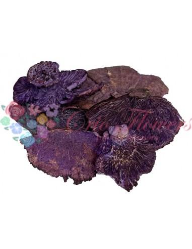 Ciuperci Decorative Mov