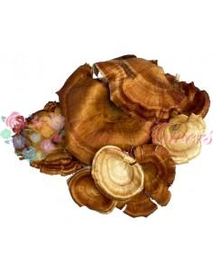 Ciuperci Codita Deco Natur