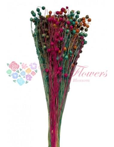 In Multicolor