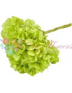 Preserved Hydrangea Pale Green