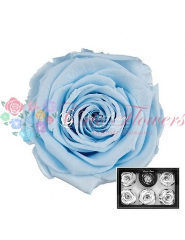 Trandafiri Criogenati Bleo Ciel XLBlu89