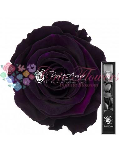 Trandafir Criogenat Tija Mov Indigo 30cmPur01