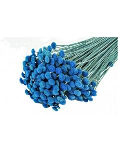 Botao Criogenat Albastru