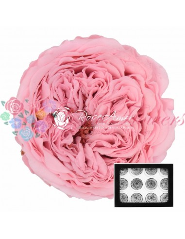 Trandafiri Criogenati Gradina Roz AmeliaPin04
