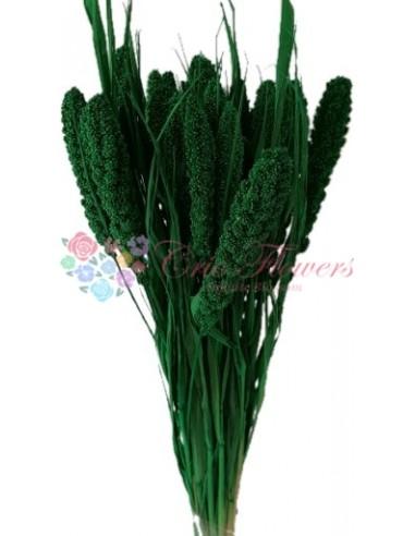 Ciumiza Verde Inchis