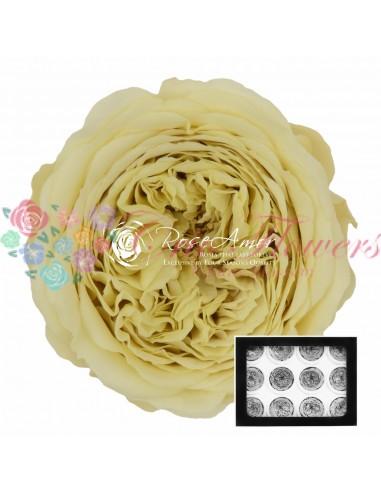Trandafiri Criogenati Gradina Galben Pal AmeliaYel01
