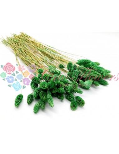 Talaris Verde Inchis