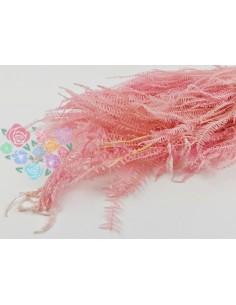 Pink Asparagus Fern Preserved
