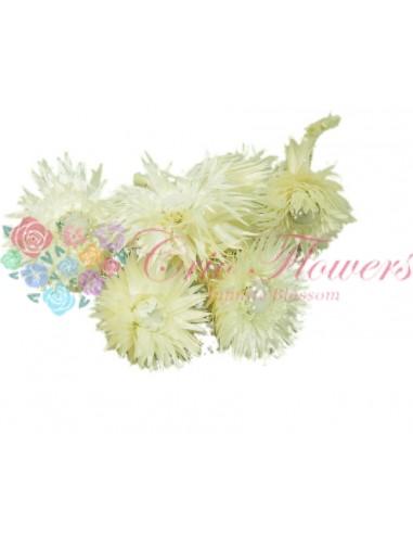 Flori Paie Uscate Albite