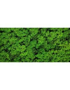 Licheni Stabilizati Verde Natur