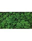 Licheni Verde Inchis-500gr