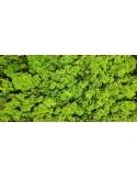 Licheni Spring Green