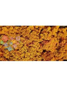 Licheni Portocaliu-500gr