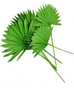 Frunze de Palmier Soare Verde Deschis