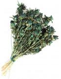 Sofran Uscat Verde Inchis