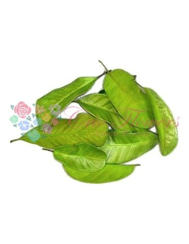 Frunze Mandioca Criogenate Verde