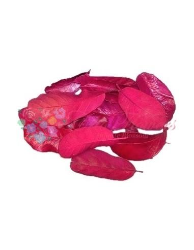 Frunze Mandioca Criogenate Roz