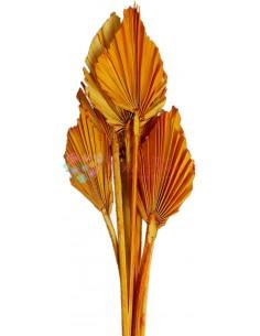 Frunze de Palmier Mini Somon