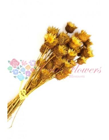 Flori Capsuni Galben