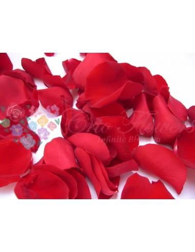 Petals 100gr Red02