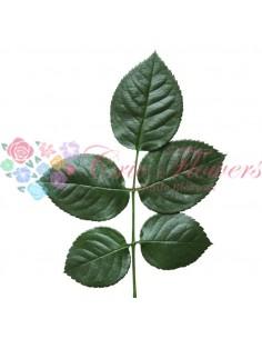 Frunza Trandafir Criogenata