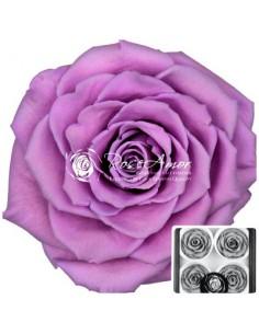 Trandafiri Criogenati Roz Lila BellaVio02