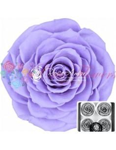 Trandafiri Criogenati Lila Pal BellaVio03