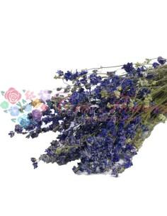 Delphinium Albastru