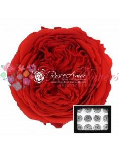 Trandafiri Criogenati Gradina Rosu AmeliaRed02