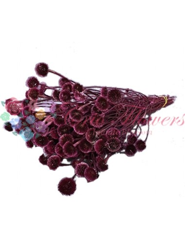 Flori Uscate Ciclam