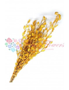 Lunaria Galben