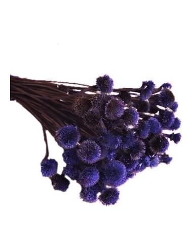 Flori Uscate Albastru