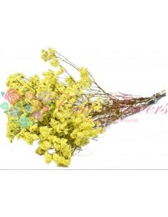 Limonium Galben Uscat Premium