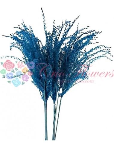 Miscanthus Albastru