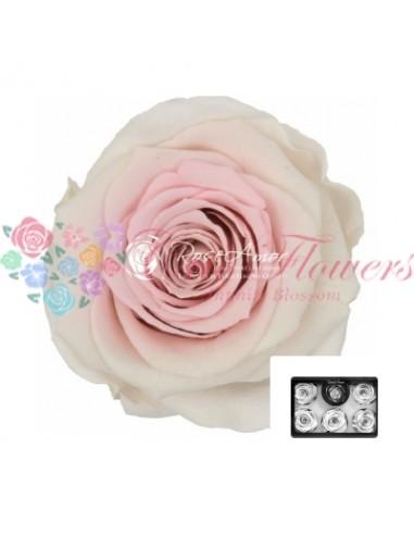 Trandafiri Criogenati Alb Roz XLBic23