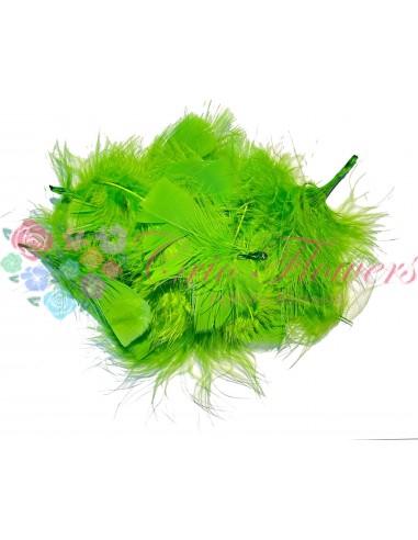Pene Verde Deschis