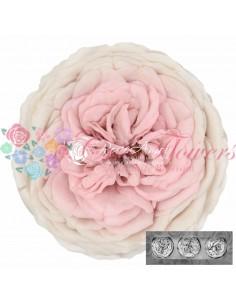 Trandafiri Gradina Criogenati Roz/Alb KabukyzaBic23
