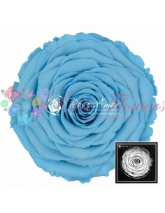 Trandafir Criogenat Bleo XXLBlu01