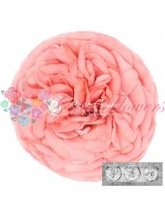 Trandafiri Gradina Criogenati Somon KabukyzaPea99
