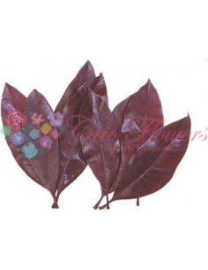 Frunze Magnolie Criogenate Burgundy
