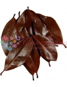 Frunze Magnolie Criogenate Portocaliu
